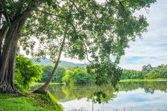 Wolken en bomen die in Water nadenken Stock Foto's