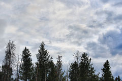 Wolken en boombovenkanten in Colorado Stock Foto