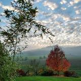 Wolken en Dalingsboom Royalty-vrije Stock Foto's