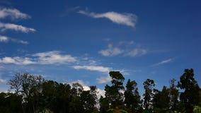 Wolken en haarlok stock video