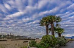 Wolken en palm Stock Afbeelding