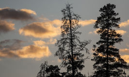 Wolken en silhouetten van de bomen in de zonsondergang Stock Afbeelding