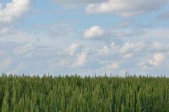 Wolken en tarwe stock afbeeldingen