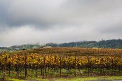 Wolken en wijnstokken stock foto