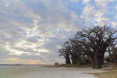 Wolken en zonsondergang bij Baines-baobabs stock afbeelding