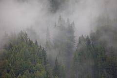 Wolken in het hout Stock Afbeelding