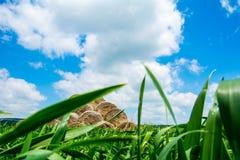 Wolken, Heuschober, Hintergrund Lizenzfreie Stockfotografie