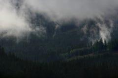 Wolken hinter Fichte Stockfotos