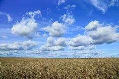 Wolken im Himmel über einem goldenen Feld Stockbild