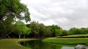 Wolken im Himmel, der über beeinflussendem Gras und Bäumen in der Stadt beweglich und windig ist, parken die Landschaft und das G stock video