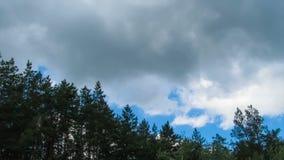 Wolken im Himmel, der über die Bäume sich bewegt stock footage
