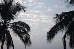 Wolken met boom royalty-vrije stock afbeelding