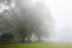 Wolken-Nebel-Bäume Stockfoto