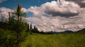Wolken over bomen en weiden stock videobeelden