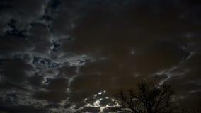 Wolken over boom stock video