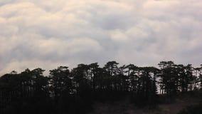Wolken over het overzees bij zonsopgang onder bos stock video
