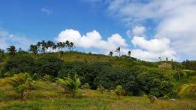 Wolken over Mangobomen 02 Keer Tijdspanne stock videobeelden