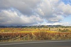 Wolken over mooi geel wijngaardlandschap stock foto's