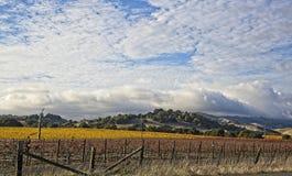 Wolken over mooi geel wijngaardlandschap stock fotografie