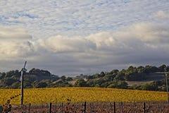 Wolken over mooi geel wijngaardlandschap royalty-vrije stock foto
