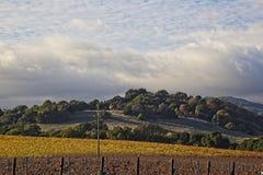 Wolken over mooi geel wijngaardlandschap royalty-vrije stock foto's