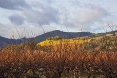 Wolken over mooi geel wijngaardlandschap stock foto