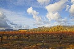 Wolken over mooi geel wijngaardlandschap stock afbeelding
