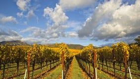 Wolken over mooi geel wijngaardlandschap royalty-vrije stock fotografie