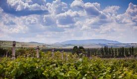 Wolken over wijngaard Royalty-vrije Stock Foto's