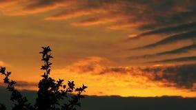 Wolken am Sonnenuntergang stock video