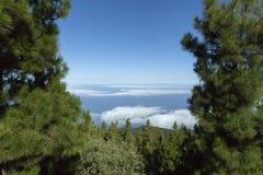 Wolken und Berge auf Teneriffa gestalteten durch Kiefer stockbild