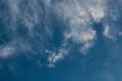 Wolken und ein blauer Himmel mit einem Bündel Fliegenvögeln Stockfotos