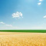 Wolken und Felder mit goldener Ernte Lizenzfreie Stockfotografie