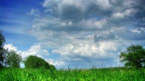 Wolken und Gras timelapse stock video