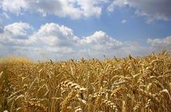 Wolken und Weizen Stockbild