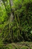 Wolken-Wald Lizenzfreie Stockfotografie