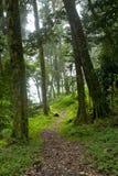 Wolken-Wald Lizenzfreie Stockfotos