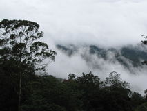 Wolken, Wald Stockfoto