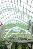 Wolken-Wald, Gärten durch den Schacht Lizenzfreie Stockfotos