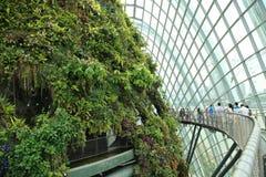Wolken-Wald, Gärten durch den Schacht Stockfoto