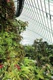 Wolken-Wald, Gärten durch den Schacht Lizenzfreie Stockfotografie