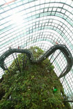 Wolken-Wald, Gärten durch den Schacht Stockbild