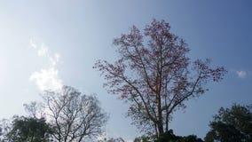 Wolkenbeweging over de boom met vele vogels stock video