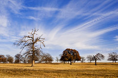 Wolkenbildung auf blauem Texas-Himmel Stockfotos