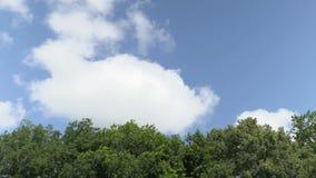 Wolkenfloss über der Waldzeit-versehenaufnahme Gesamtlängenclip 4K, UHD stock video