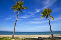 Wolkenhimmel und -kokosnuß Lizenzfreies Stockfoto