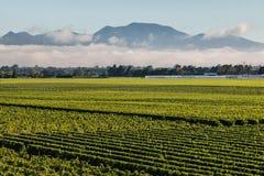 Wolkeninversie boven wijngaarden in Marlborough Royalty-vrije Stock Foto's