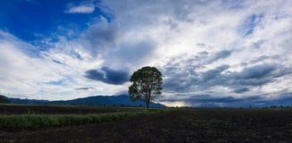 Wolkenkaap met een boomsilhouet Stock Foto's