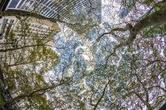 Wolkenkratzer in Midtown Manhattan mit Platanenbäumen in New York lizenzfreies stockbild