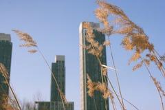 Wolkenkratzer und trockene Getreide lizenzfreies stockbild